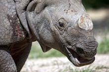 Rhino Close