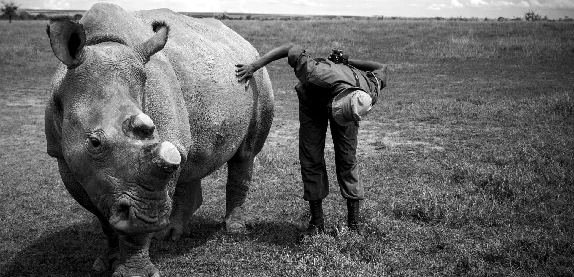 Rhino-care