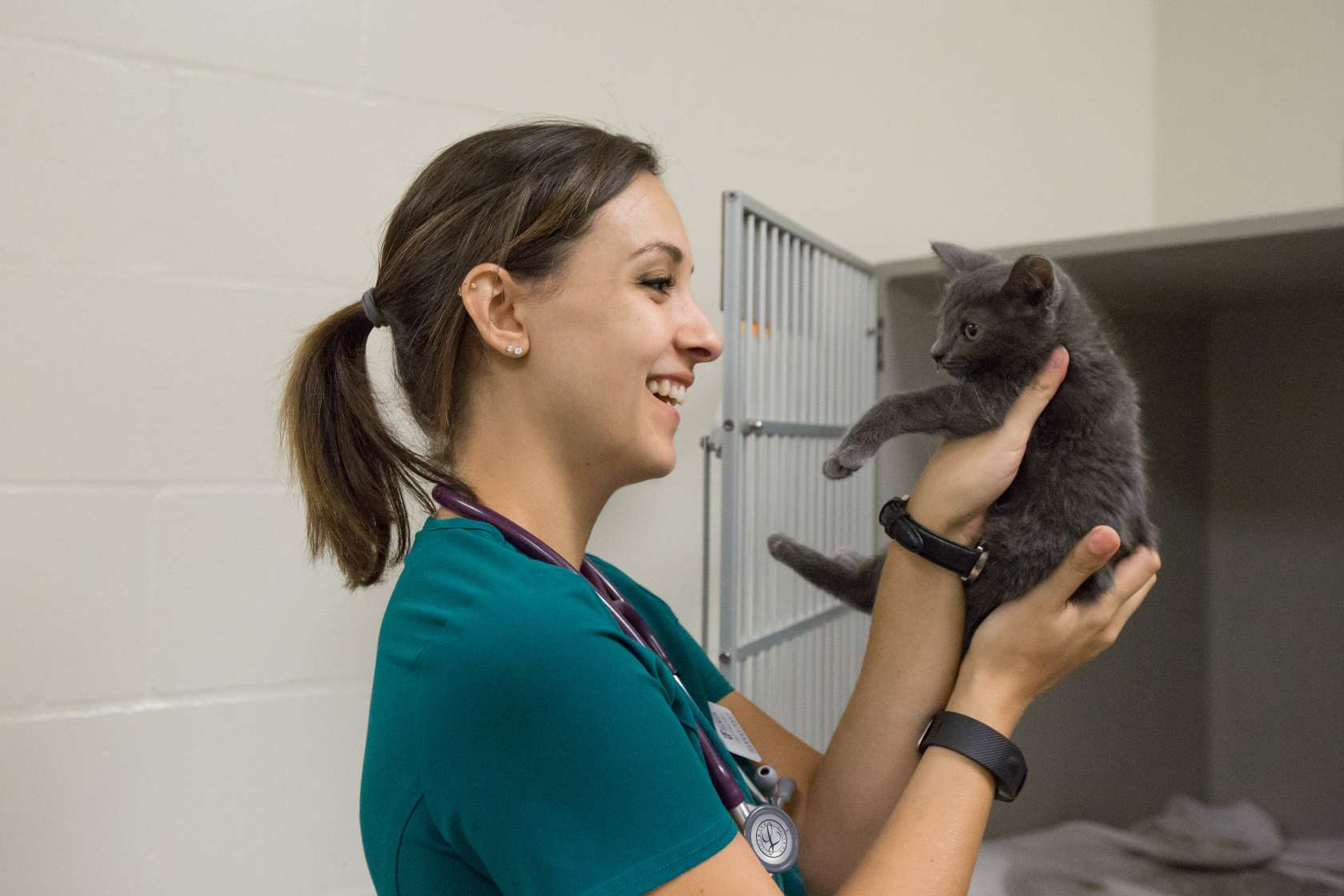 UF college of Veterinary Medicine students enrolled in a service learning program through the Veterinary Community Outreach Program provide treatment to small animals from local Animal Shelters.